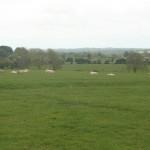 A Sheep Circle