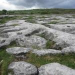 Burren terrain & foliage