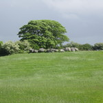 Carrowmore - Stone Circle