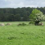 LoughGur- Small Stone Dance